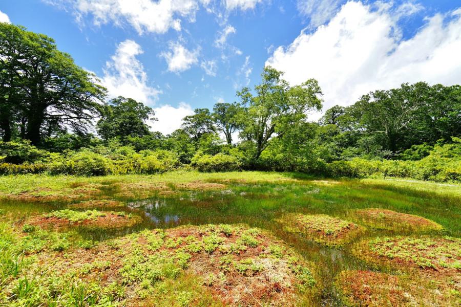Amou Prefectural Nature Park & Marshlands