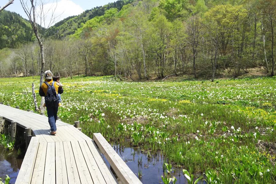 Ikegahara Wetland